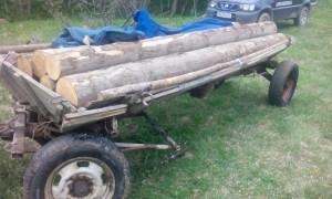 jandarmi- lemne