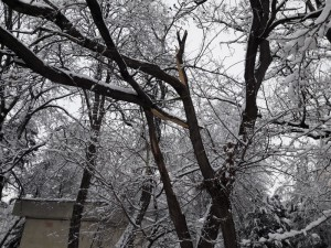 copac rupt, spitalul judetean, stiri, botosani