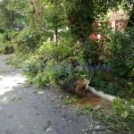copac rupt, stiri, botosani, botosaninews (2)