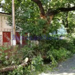 copac rupt, stiri, botosani, botosaninews (3)