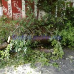 copac rupt, stiri, botosani, botosaninews (4)